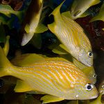 Bad Habits in Scuba Diving